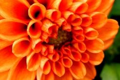 Blüten2.JPG